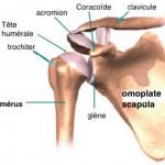 Epaule-Anatomie